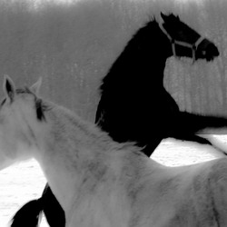 Black Beauty in White Company nr. 2