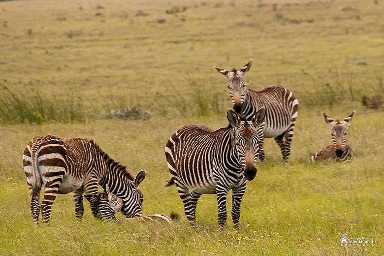 Botlierskop in Zuid Afrika