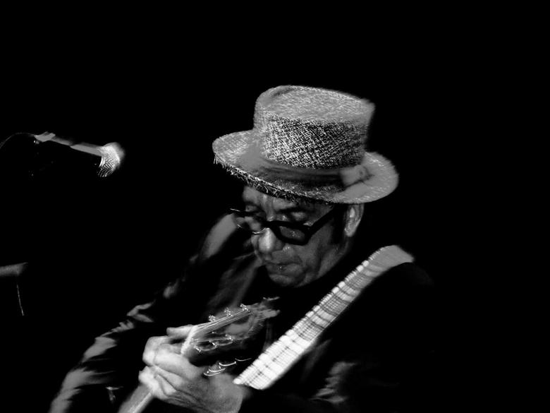 Elvis Costello - Elvis Costello. Live. Zingend 'I Want You' in Eindhoven.