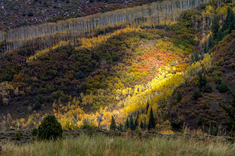 Herfstkleuren in Colorado