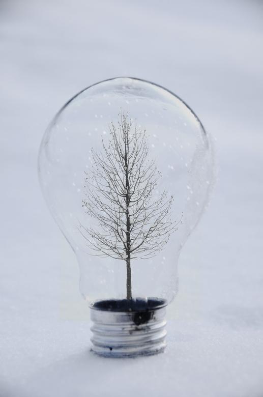Winter Bulb - Conceptual photo