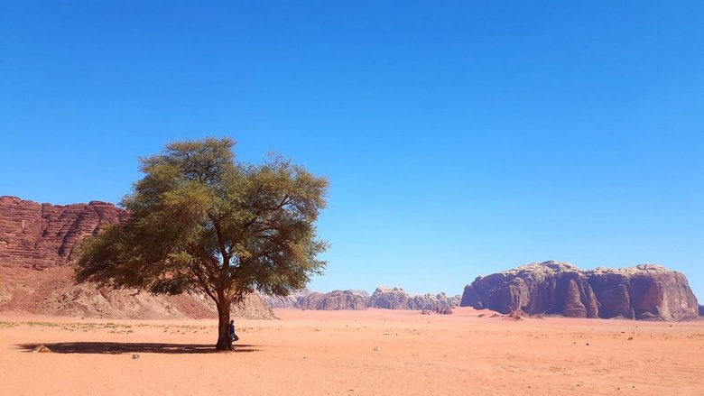 Lonely Tree. - Somewhere in the middle of nowhere, in Wadi Rum, Jordan.