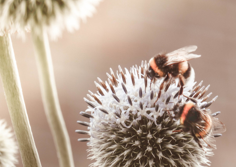 Bees -