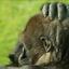 gorilladag vandaag................