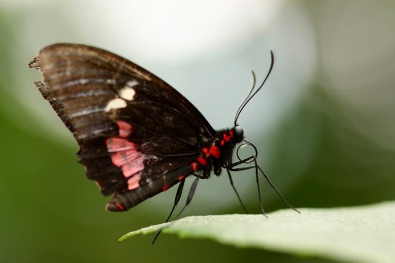 Nectar - Nectar op de tong kun je nog zien