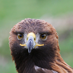 The eyes of the eagle...