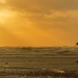 Storm IJmuiden aan Zee 2