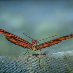 Julia Butterfly 2