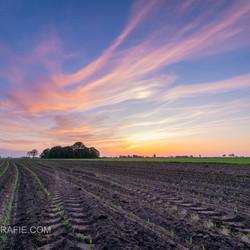 Zonsondergang boven mais