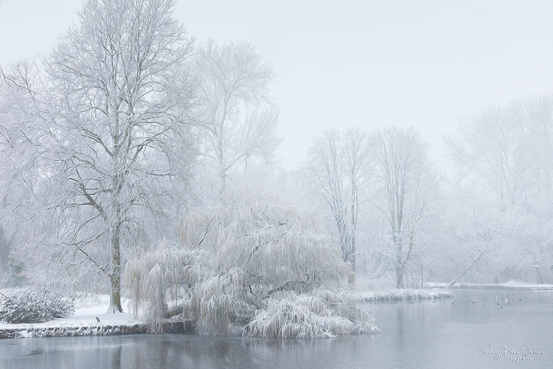 """eerste winterprik  - bedankt vr de fijne feedback op m&#039;n vorig winterse foto.<br /> zoek de reiger <img  src=""""/images/smileys/wilt.png""""/><br />"""