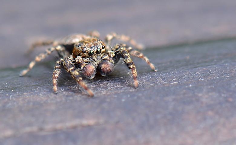 Harig monster!! - Even rusten op de bank, ik keek langs mij en zag dat ik niet alleen was.