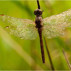 Hanging out to dry