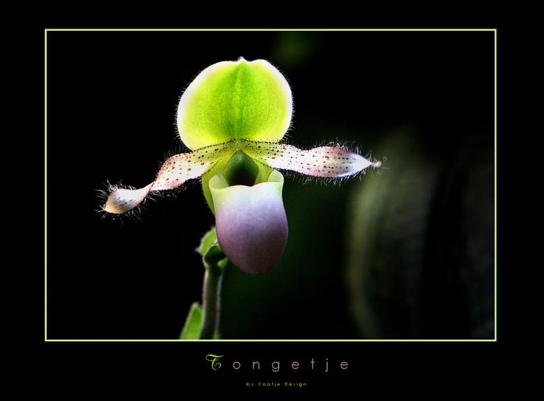 Tongetje - Deze bloem stak demonstratief zijn tongetje naar me uit... kan dat !? Kijk maar... deze plant, ik dacht een orchideëen soort, maar kan me v