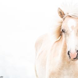 Horse in High key (2)
