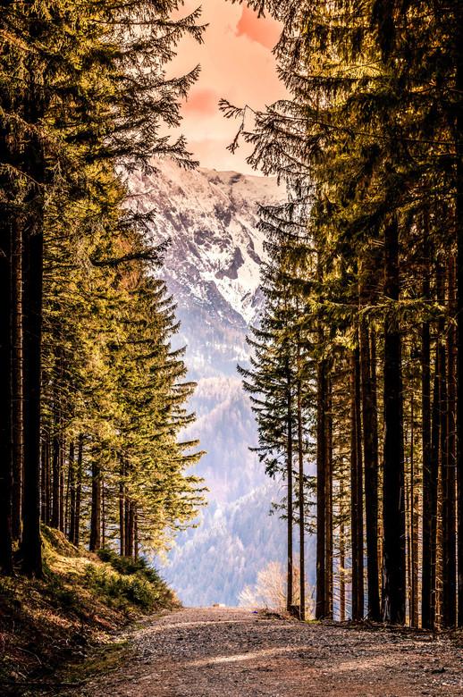 Oostenrijkse bossen