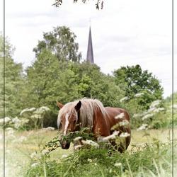 Paard in wei (bewerkt)