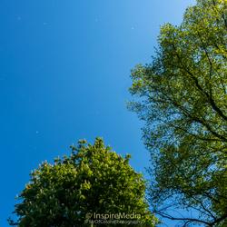 Watching (NotSnow) Fall Yesterday Noorderplantsoen Park #InspireMedia