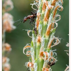 boer mier aan het werk