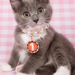 Dé nr 1 kitten!