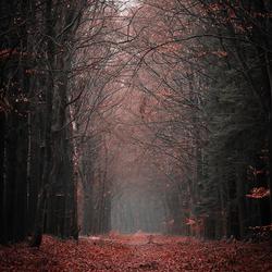Forest walkthrough