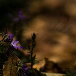 Herfst met een kleurtje