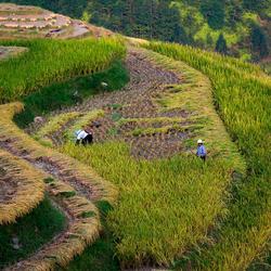 Rijstterrassen Ping'an