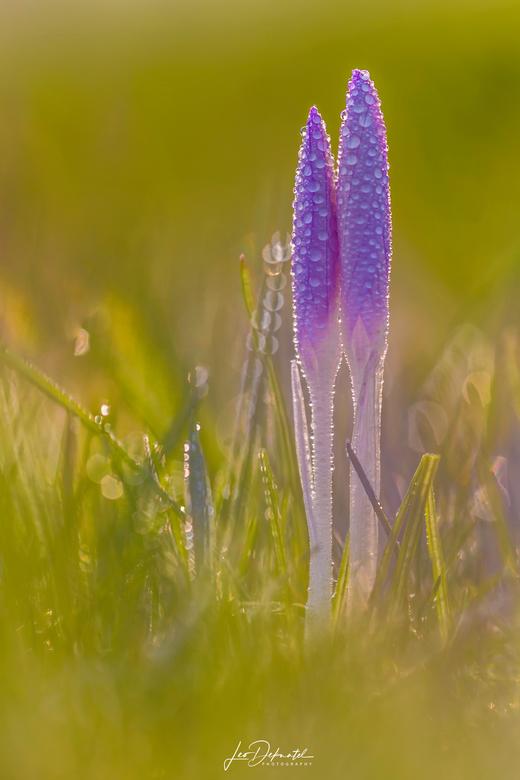Purple Rain - Purple Rain<br /> <br /> Ben geen muziek mens, maar deze titel vond ik wel bij deze foto passen.<br /> <br />