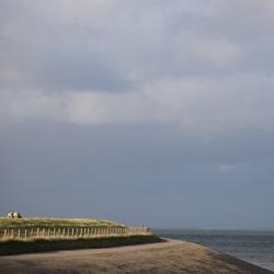 Schapen op waddendijk Texel