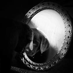In a doggies world
