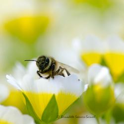 Spiegeleitjes met bijtjes