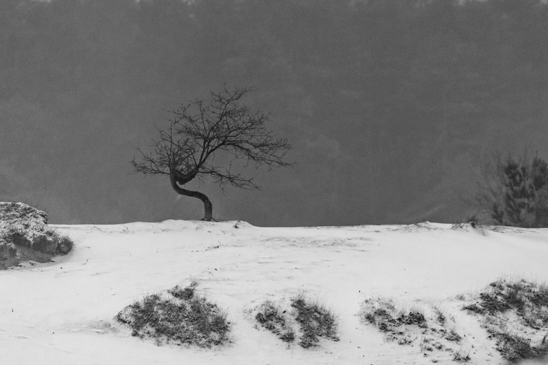Eenzaam en vol kronkels - In een besneeuwd landschap, waar het nat en nevelig was, stond deze kronkelende eik, eenzaam te wachten op de dingen die nog