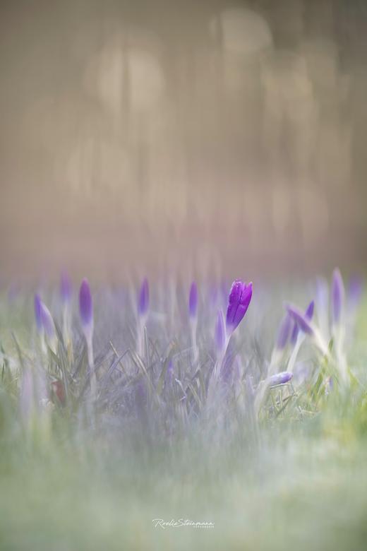 Let's start, springtime! -