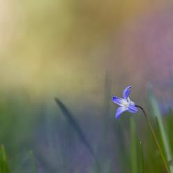 colourfull spring