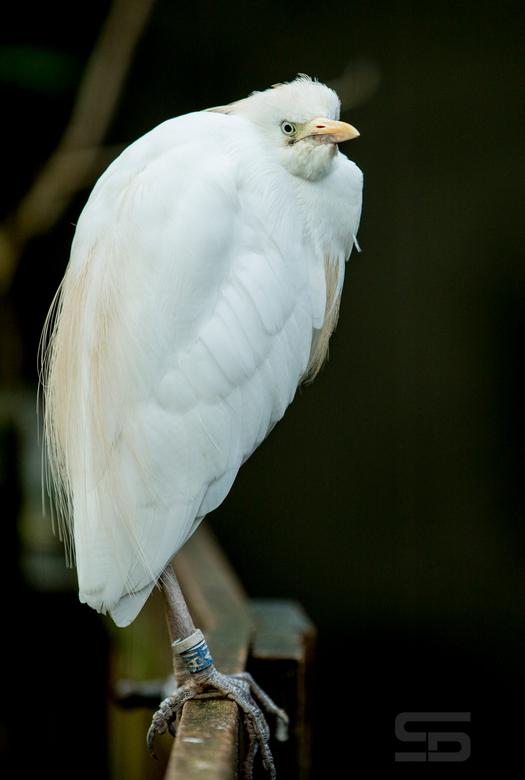 Vogel V -