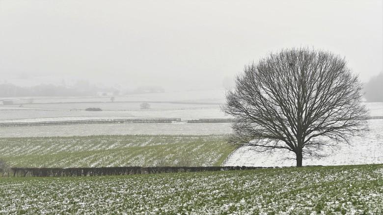 Winter in januari - Enorm bedankt voor alle reacties bij mijn vorige opname &quot;Sneeuw, schapen en mist!<br /> <br /> Fijne dag vandaag!
