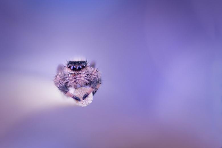 droom.... - Voor velen een nachtmerrie, voor mij een prachtig klein diertje. En een voortreffelijk model.
