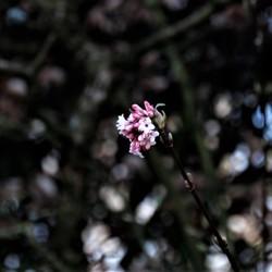 wow de bloem komt tot zijn recht