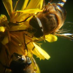Nectar!