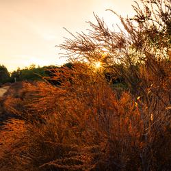 Zonsondergang in de droge natuur