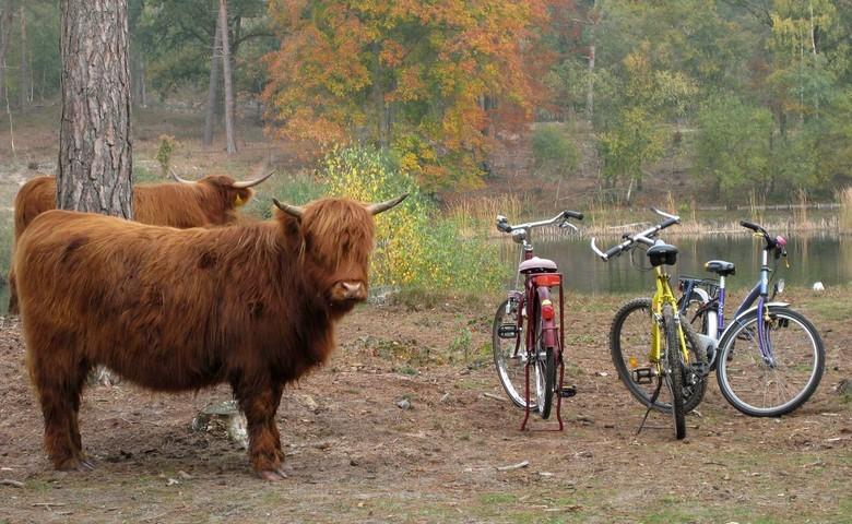 Bewaakte fietsenstalling - Het is geen winterfoto maar een herfstplaatje en komt uit mijn historisch archief van 2009.<br /> <br /> In Boswachterij