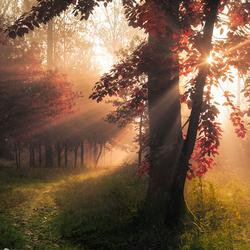 Sparkle of autumn