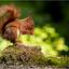 Eekhoorn cute
