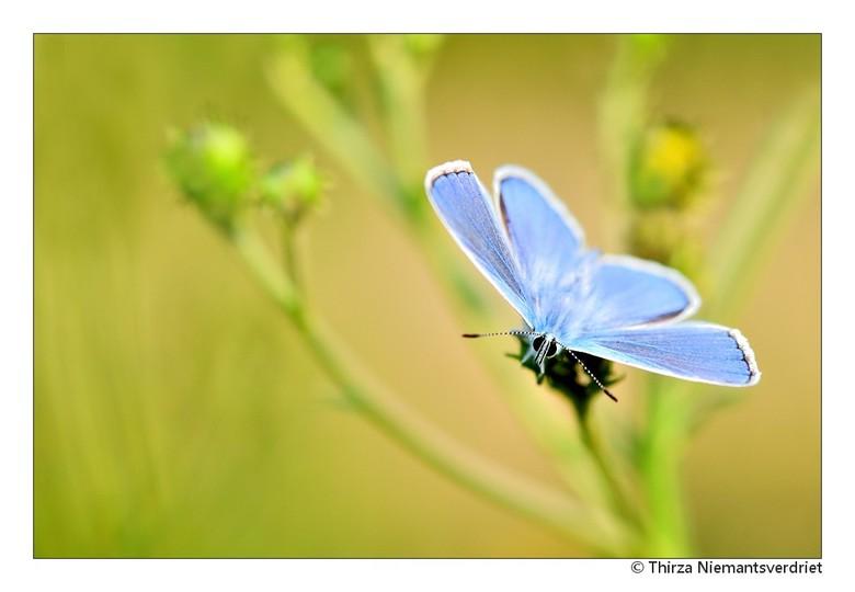 Eyes on You - Niet alleen de fotografen waren bezig met volle aandacht de vlinders en blauwtjes te spotten . . .  andersom werden we dus ook bekeken!