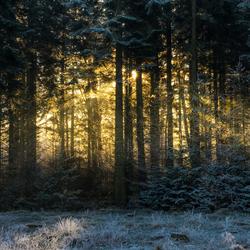 Hello winter wonderland