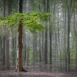 Bos door een boom zien