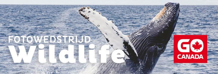 fotowedstrijd: Wildlife