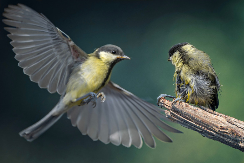Flying lesson -