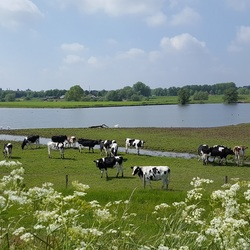 Hollands tafereel in Westervoort