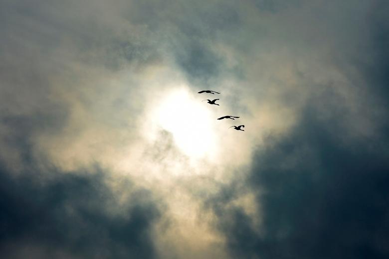 Duistere lucht - De ganzen zijn misschien niet herkenbaar, maar hierbij ging het mij om de combi met de lucht....
