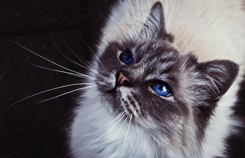 Beauty - Kwam deze prachtige kat tegen op straat. Die prachtige ogen vielen me meteen op (ja die waren echt zo blauw!) en moest gewoon een foto maken.